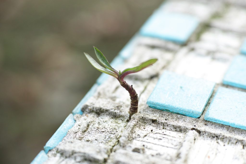 green-leafed-plant-on-sand-1438404